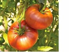 50 Brandywine Red Tomato Seeds Heirloom Open Pollinated fresh Non-GMO garden