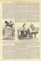 1898 John Higgins Circus History Jumper Vintage Scientific American Genealogy