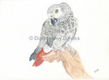 African Grey Parrot Art Print A4 Giclee Print Birthday Gift Mothers Day Gift