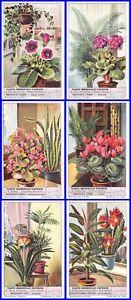 Paket 6 Glanzbilder Liebig Serie Plantes Prunkschale Innenraum