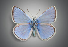 STUNNING BLUE BUTTERFLY GREY BACKGROUND #35 CANVAS PICTURE WALL ART HOME DECOR