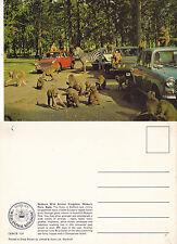 1970's WOBURN ANIMAL KINGDOM WOBURN BEDFORDSHIRE UNUSED COLOUR POSTCARD