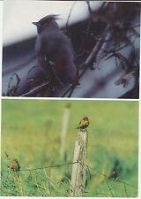 Faroe Islands 1996 Birds, Waxwing etc, Official Issue postcards, mint unused