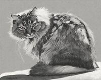 Fine Art Print of Original Ink drawing Cat animal 8X10''