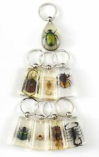 8 pieces Real Insect Keychain,assorted bugs in clear acrylic,get one free