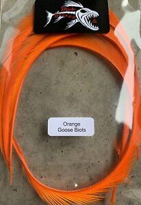 Orange Goose Biot