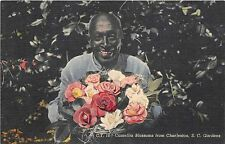 B86590 camellia blossoms from charleston s c gardens usa  black americana types