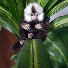 Realistic Baby Marmoset Monkey OOAK New World Wildlife Doll Animal - Angelica