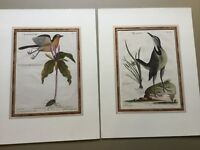 Two Original Hand Colored Engraving By Johann Micheal Seligmann 1749-1776