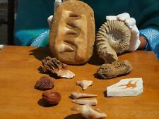 Fossil Collection Mosasaur Tooth +XL Ammonite + 8 more 90 Million years old