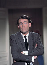 PHOTO COMMENT VOLER UN MILLION DE DOLLARS - PETER O'TOOLE /11X15 CM #1