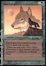 Wyluli Wolf Version 2 // EX // Arabian Nights // engl. // Magic the Gathering