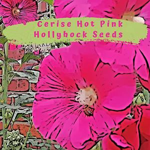 Hollyhock Cerise Pink Flower 40 plus Seeds