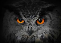 Awesome Night Owl Face Poster Size A4 / A3 Wild Animals Poster Gift #8252