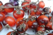 lot 300 graines tomate cerise BLEU GOLD BERRIES (BIO) voir les photos