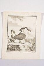 Oiseau SAVACOU Petit Héron Gravure XVIII° Buffon De Sève dessinateur