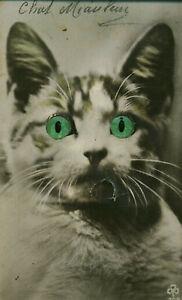 Carte postale fantaisie chat miauleur