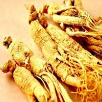 WHITE KOREAN GINSENG - Whole Root Pieces - White Panax Roots