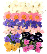 Pressed flowers mixed, larkspur marguerite verbena torenia foliage floral art