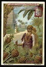 Pineapple Tropical Fruit Tree Ananas c1900 Trade Ad Card