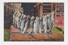 C T Art Fishing Scenes 10 Subjects S-454 A GOOD DAY'S SPORT fish/trout Postcard