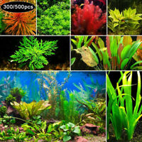 300/500Pcs Rare Aquatics Plant Seeds Aquarium Underwater Moss Grass Stem Decor