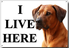 RHODESIAN RIDGEBACK I LIVE HERE METAL SIGN (A4 SIZE) SECURITY,WARNING,GUARD DOG.