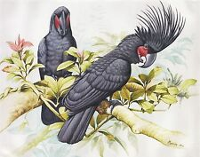 Hand painting Balinese Parrots Birds 321