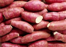 Purple Skin White Flesh Sweet Potato x3 Unrooted Plants/ Stem Cuttings