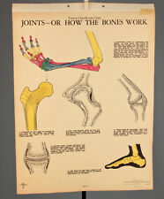 Vtg. 30s Colored Turtox and Joints Classroom Science Anatomy Poster #704