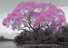 RIESEN Poster TREE / BAUM - Pink Blossom  ca140x100 NEU FL552