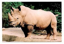 White Rhinoceros Postcard Catskill Game Farm New York Wild Animal Rhino Horns