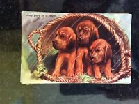 a2m oostcard old undated unused dogs any port in a storm