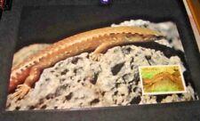 Norfolk island Post card Wwf Fdc Gecko 45c (42)