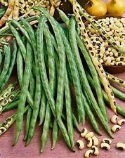 50 BLACKEYE PEA Black Eye Eyed Southern Cow Peas Seeds California Fresh Bean