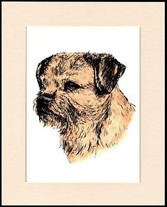 BORDER TERRIER LOVELY HEAD STUDY DOG PRINT MOUNTED READY TO FRAME