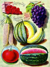 Iowa Co - Raspberries Vegetables Seed Packet Catalogue Advertisement Poster