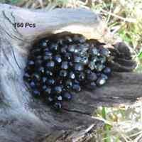 150 Perles de bohème facette 5 mm Tchèque coloris Jet