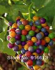 Colorful Rainbow Grapes seed 100 pcs/lot Rare species bonsai fruit Grape seeds