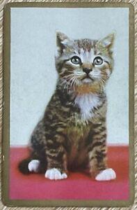 Vintage Swap / Playing Card, Sweet Tabby Kitten, Cat, Gold Border