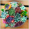 Mixed Succulent Seeds 400pcs LithoLiving Stones ps Rare Plants Cactus Home Plant