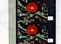 Advertising 16mm Film Reel - TREE TOP Spot #5