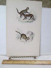 Vintage Print,Cats,Anteater,Paris , 19th Cent