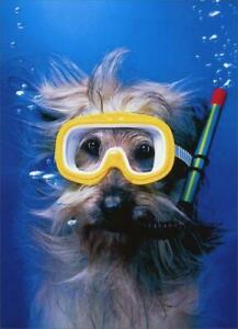 Thank You Greeting Card - Snorkel Dog