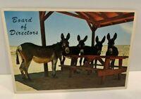 Bob Petley 1978 Board Of Directors Group Of Mules C2 Postcard # 131370