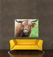 GIANT PRINT POSTER ANIMAL COW CATTLE HIGHLAND LIVESTOCK TAURUS PDC155