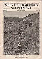 1916 Scientific American Supp May 6 - Forestry; Bagdad Railway in Europe's War