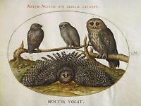 HOEFNAGEL FLEMISH ANIMAL OWL OLD ART PAINTING POSTER PRINT BB5700A