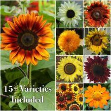 Seed Needs Bulk Package Of 1,000+ Seeds, Sunflower Crazy Mixture 15+ Varieties (