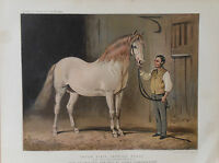 1876 Antique Print CREAM STATE CARRIAGE HORSE - Portrait by Alfred Corbould